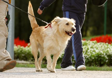 walking_dog430x300